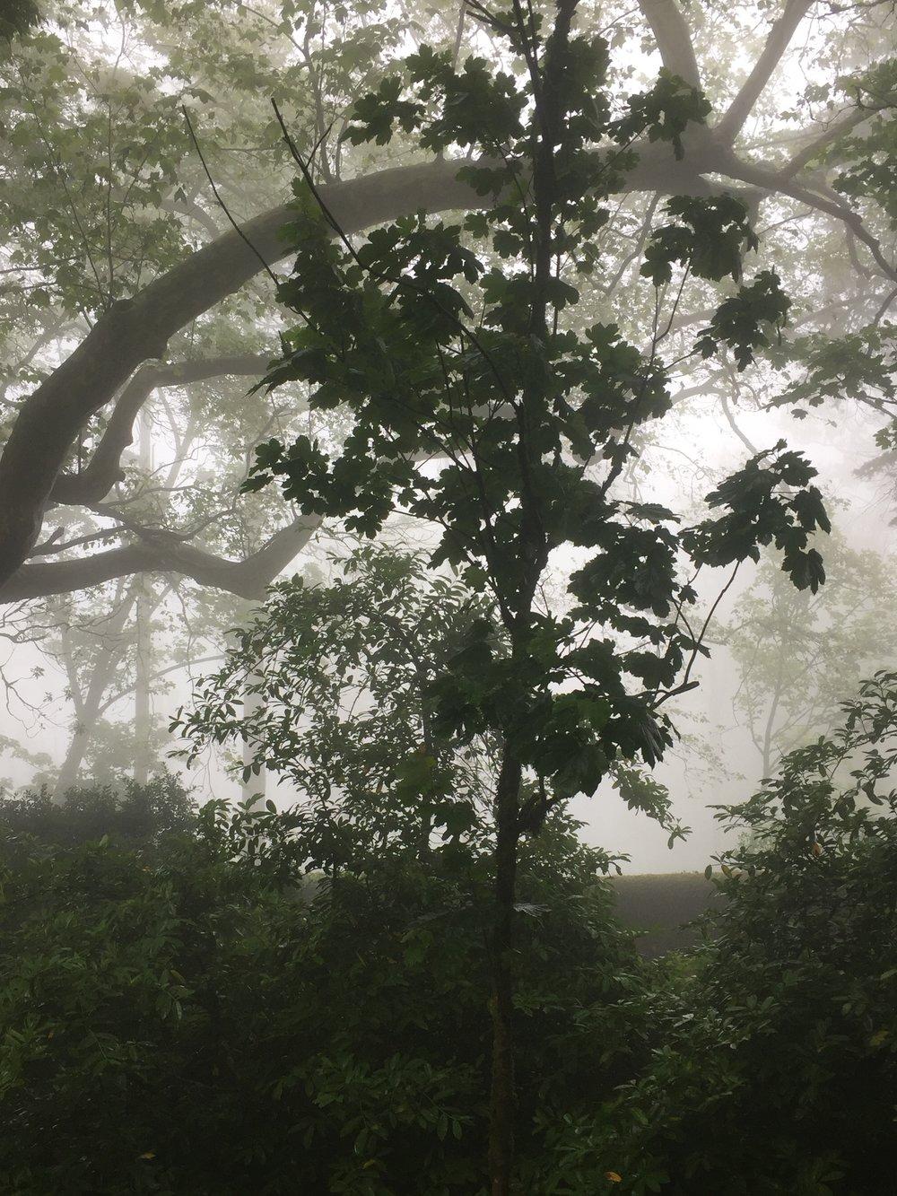 Na subida à Pena,a mística e a neblina envolvem a floresta densa e repleta de espécies do mundo todo.