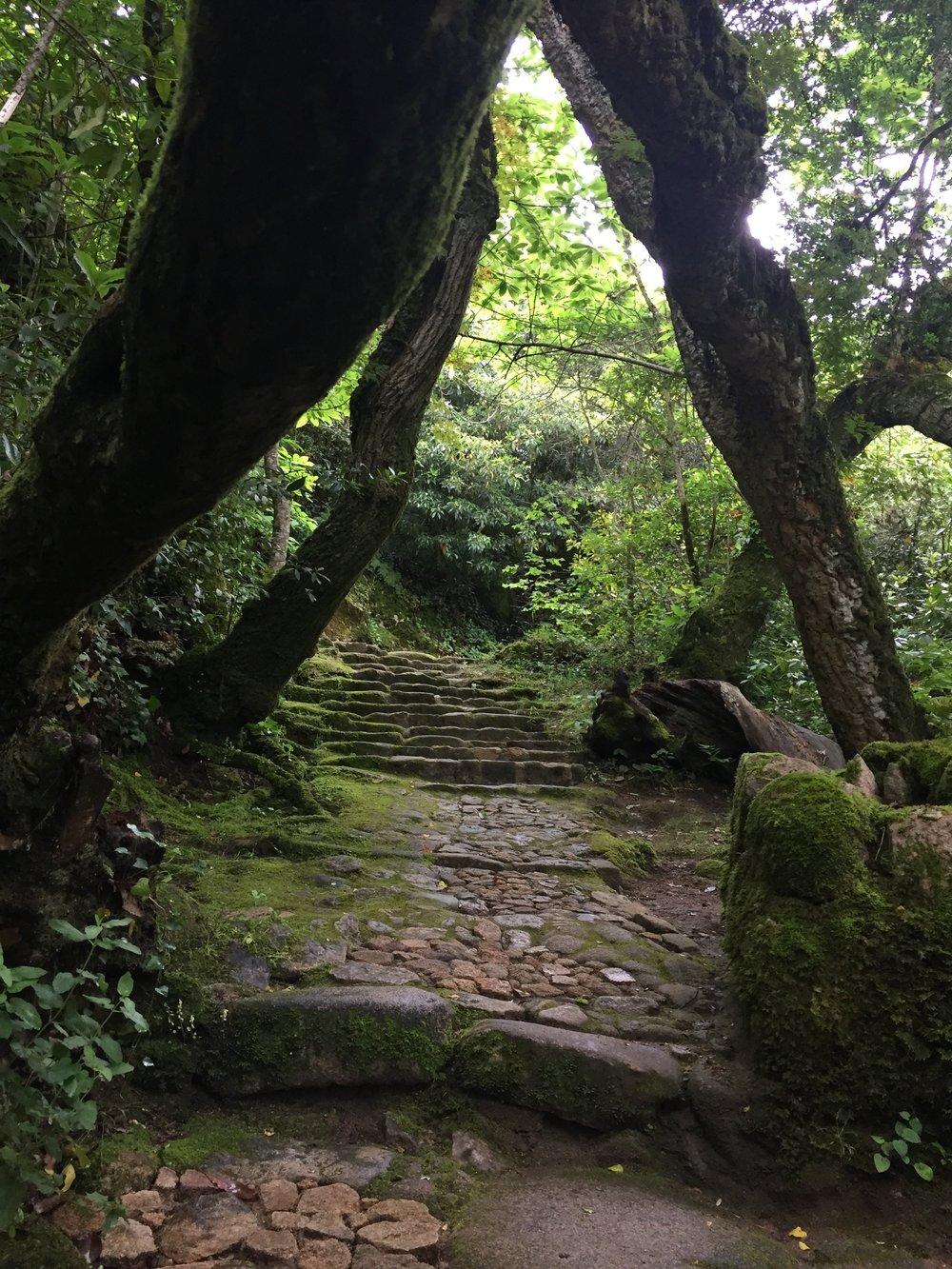 A natureza é um santuario, no Convento dos Capuchos