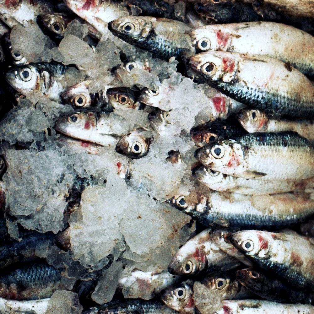 Fish Carré 3.jpg
