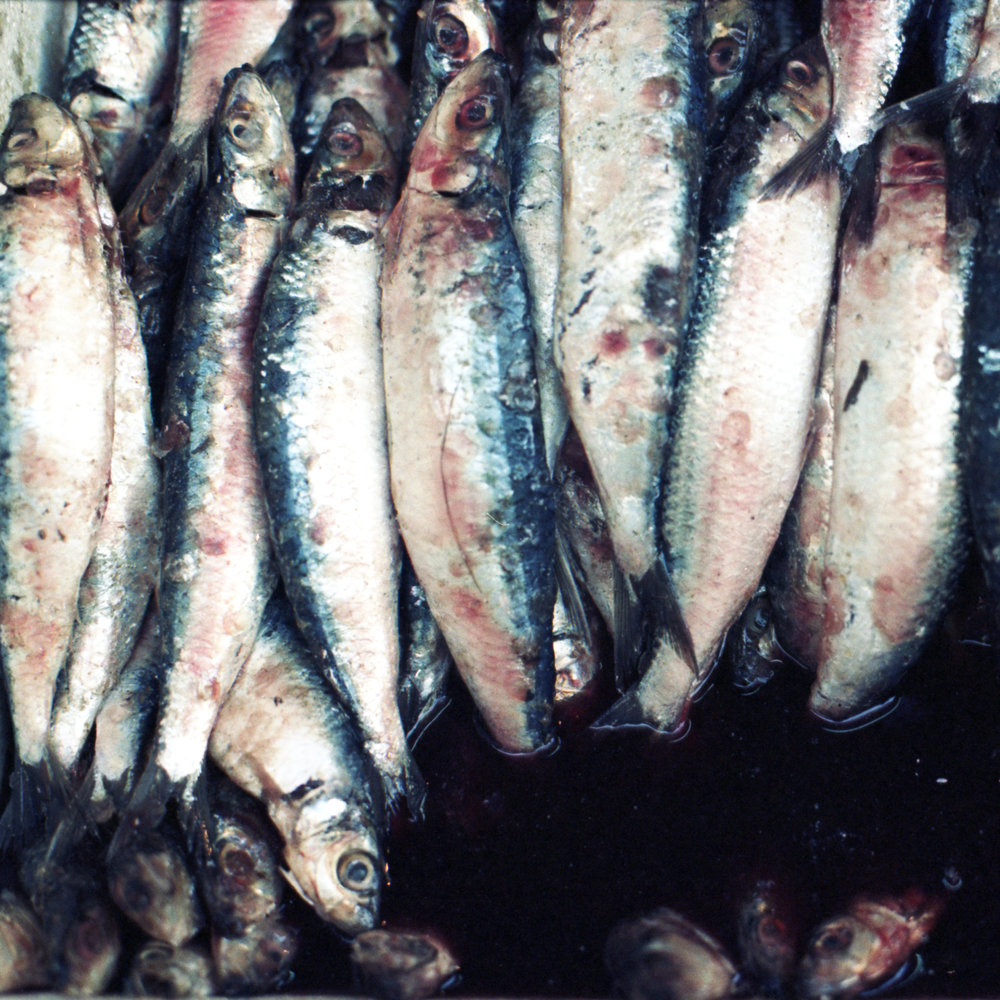 Fish Carré 6.jpg