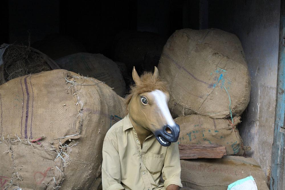 horse116.jpg