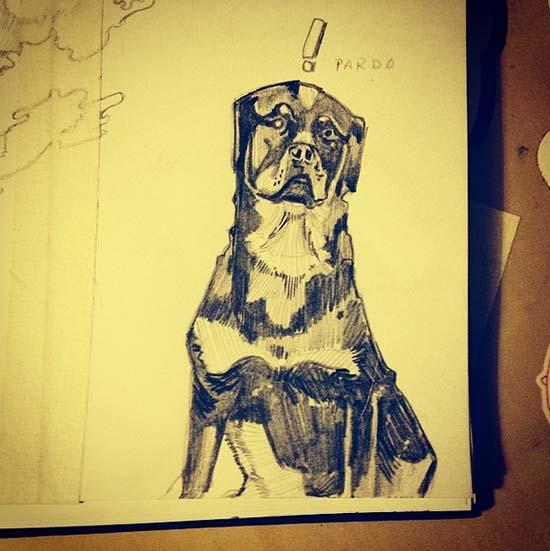 black rottweiler sketch