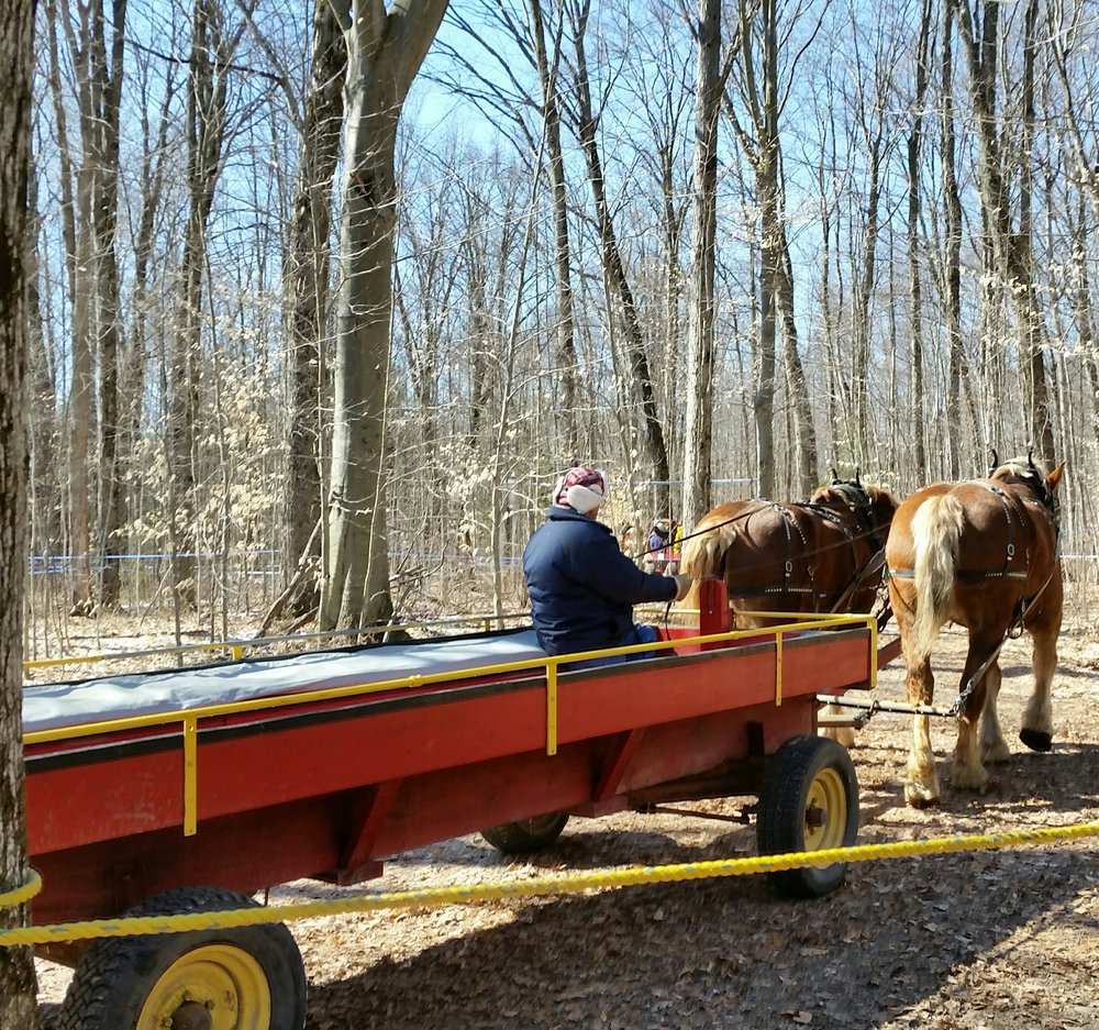 A wagon ride through the sugar bush.