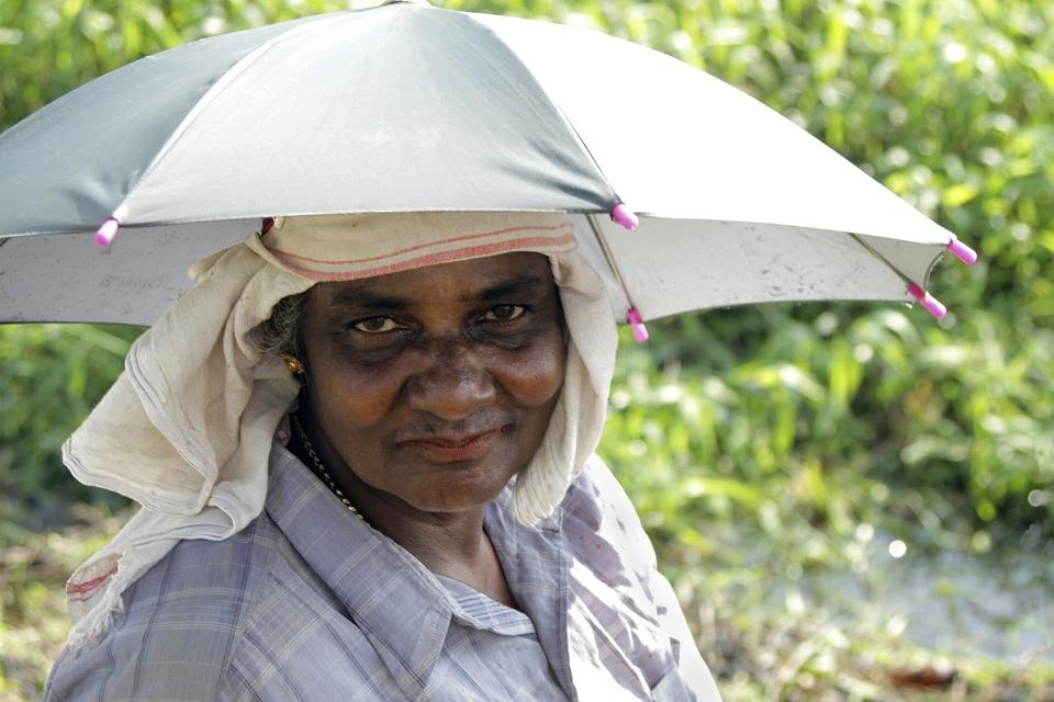 Rice Planter_web.jpg