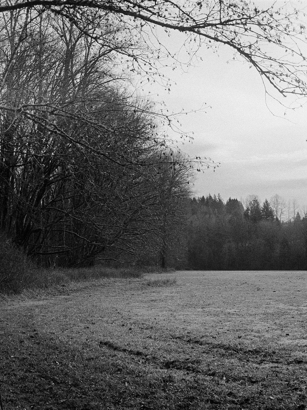 The Field's Edge | Minolta XD5 + Minolta 50/1.4 - Ilford HP5+