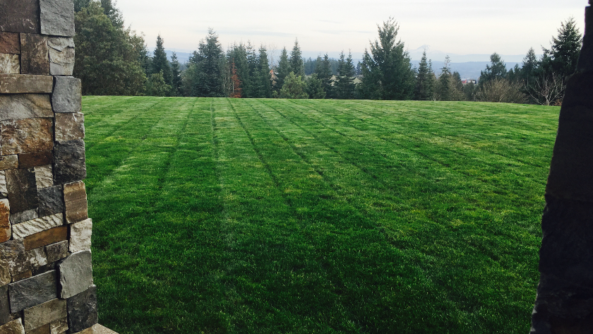 Freshly mowed green lawn in the backyard