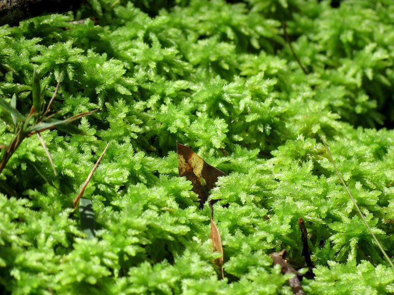 sphagnum-moss.jpg