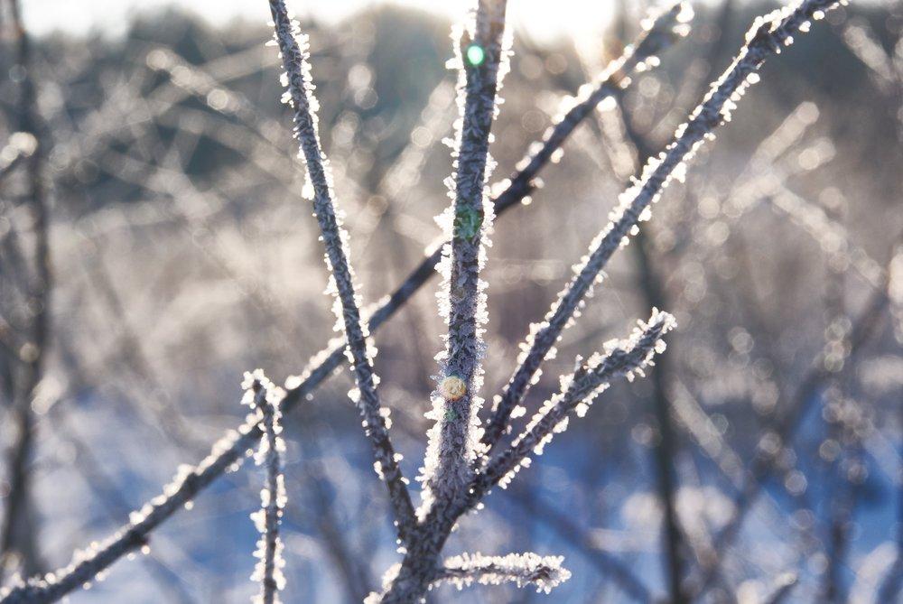 icy-tree-winter-902321.jpg