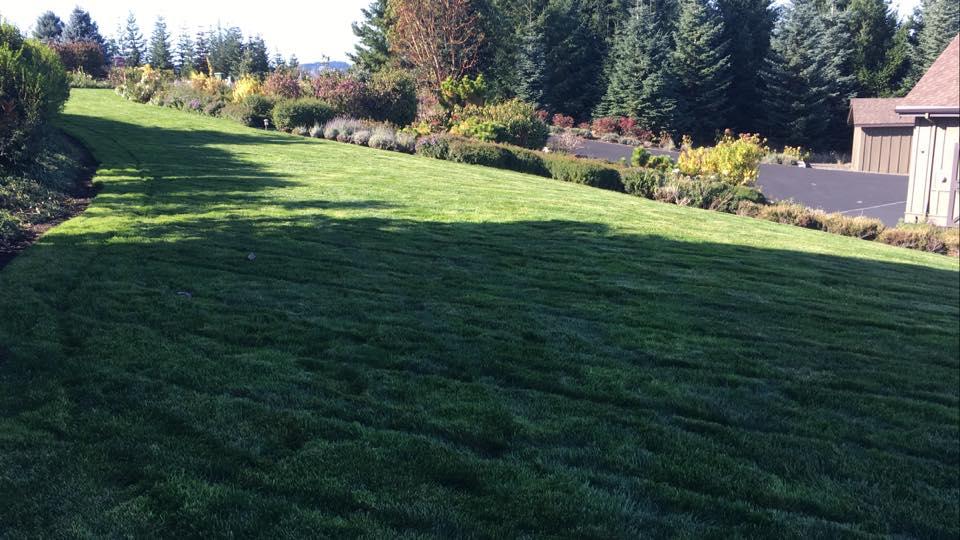 Lawn Care - Creative Landcare.jpg