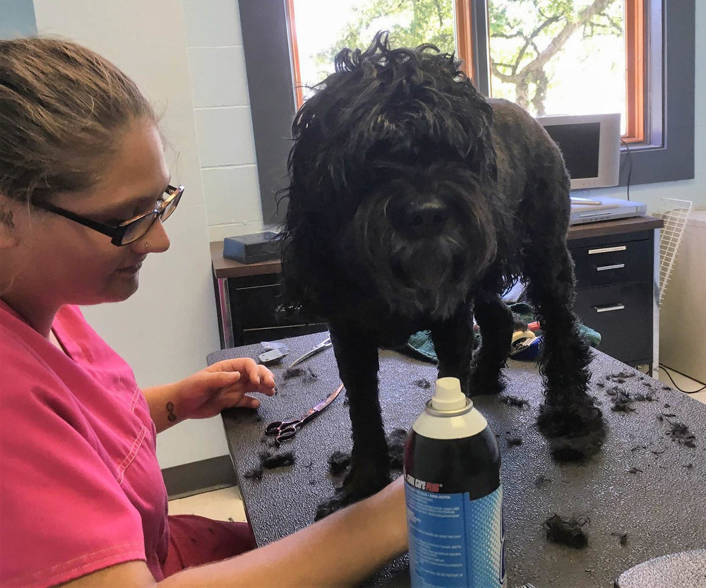 A dog being groomed
