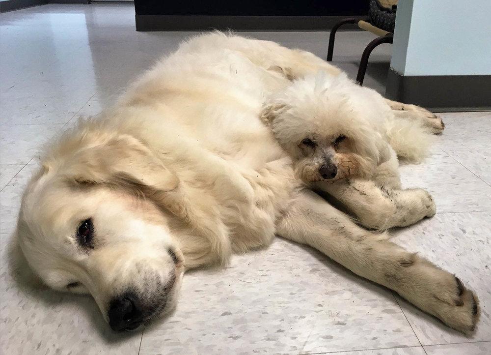 2016-dog-love-6_35264714960_o.jpg