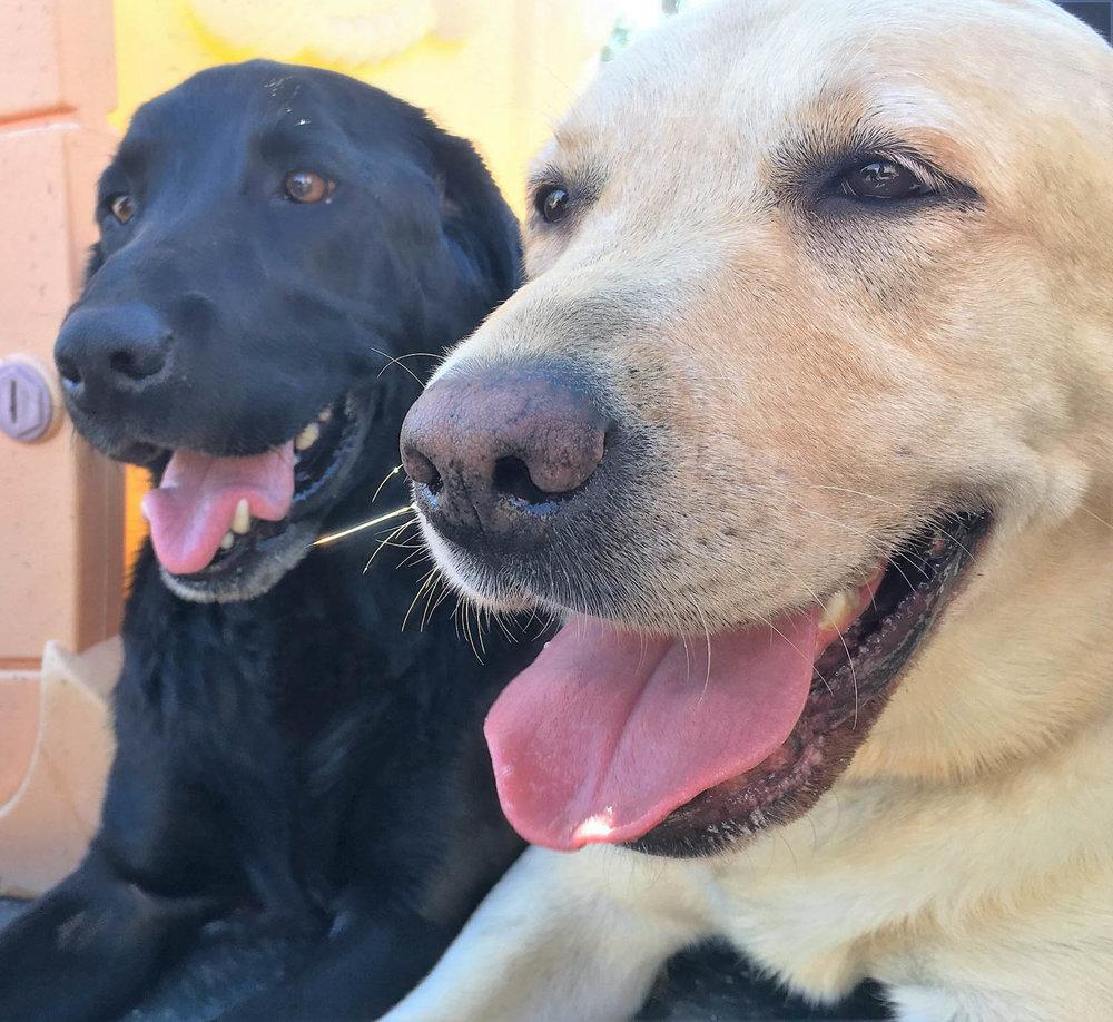 2016-dog-love-13_35483063242_o.jpg