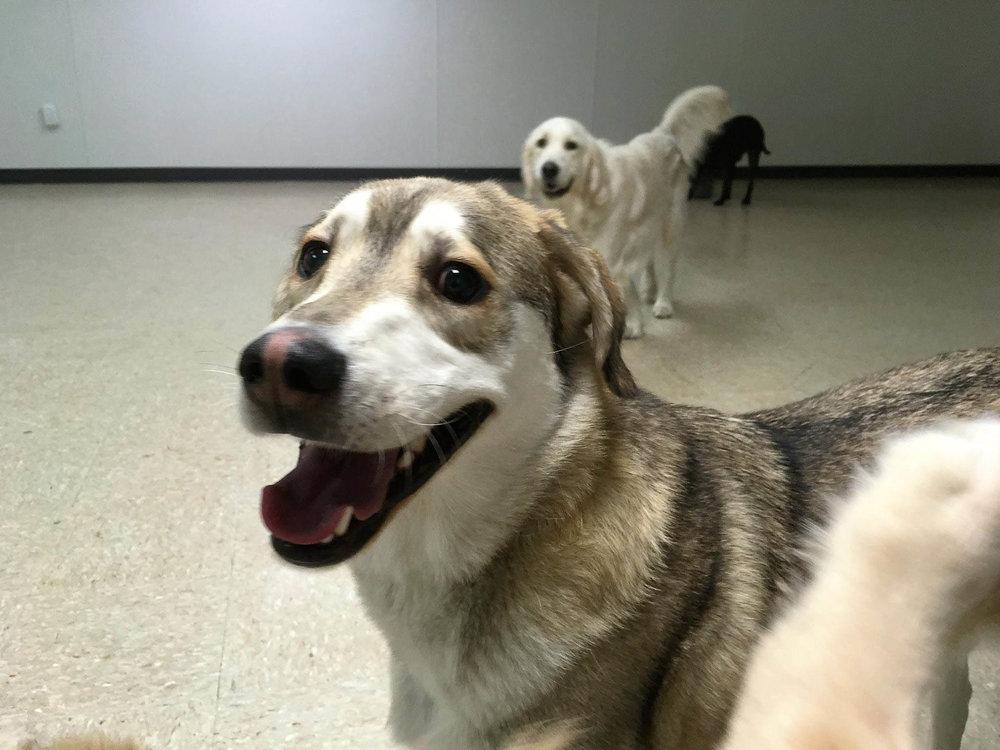 2016-dogs-7_35264356050_o.jpg