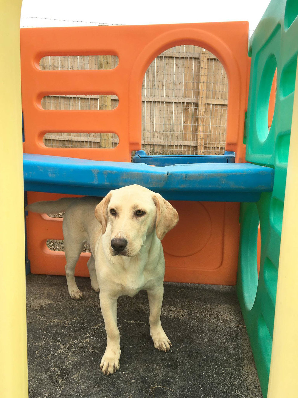 2016-dogs-8_35482674762_o.jpg