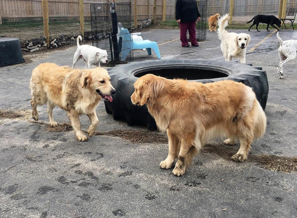 2016-dogs-9_35264355670_o.jpg