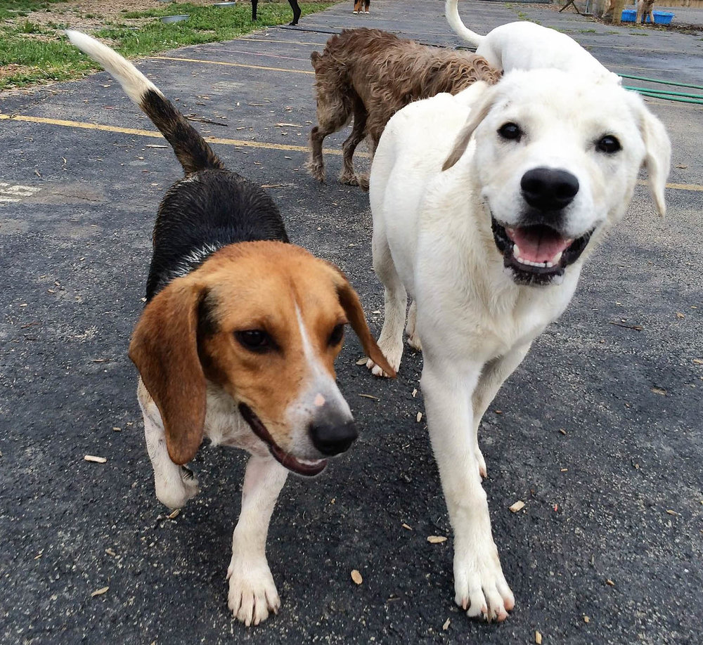 2016-dogs-23_35482671352_o.jpg