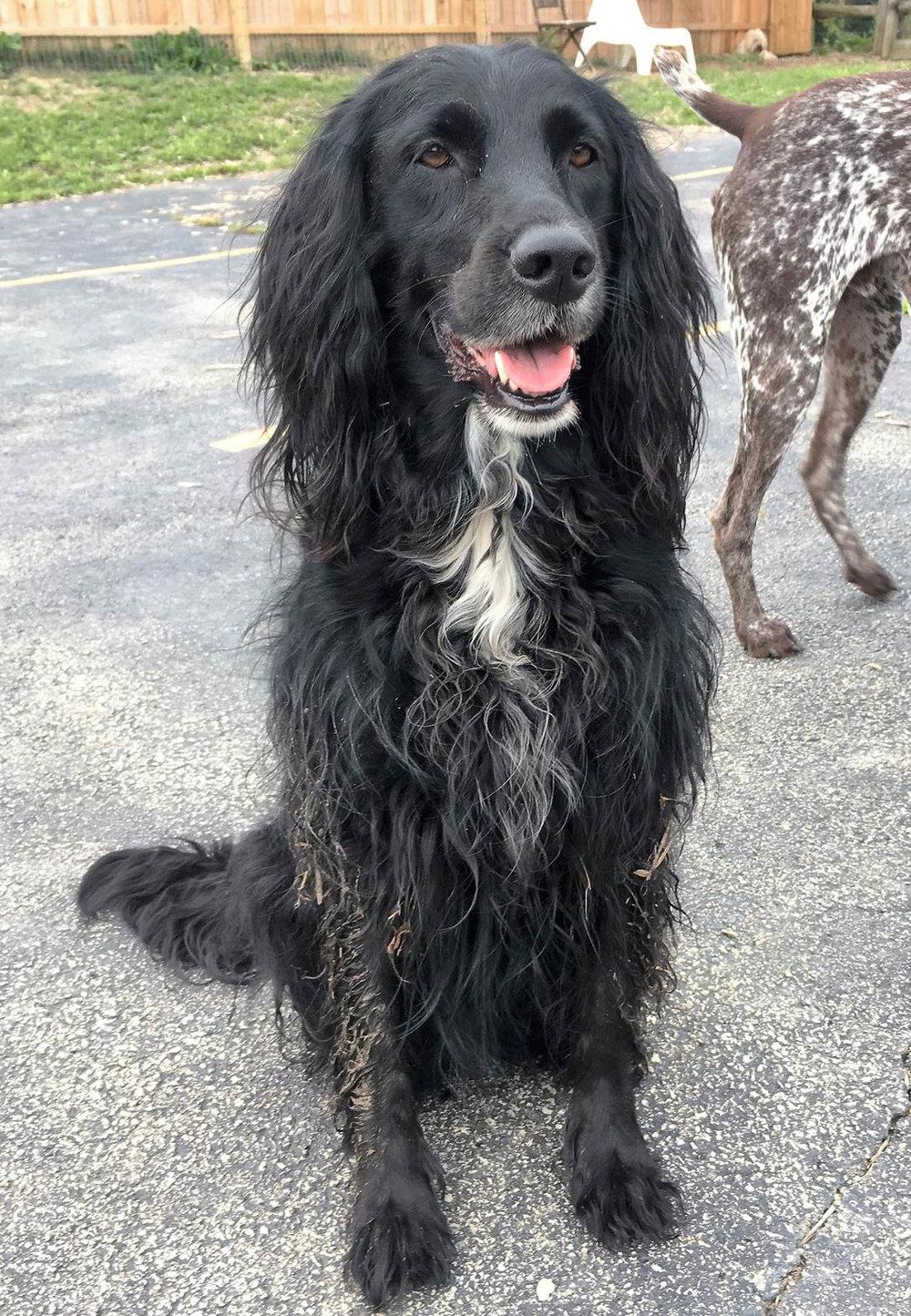 2016-dogs-28_35264352730_o.jpg