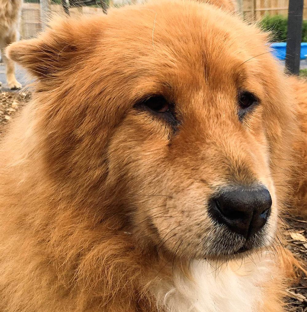 2016-dogs-32_35611853476_o.jpg