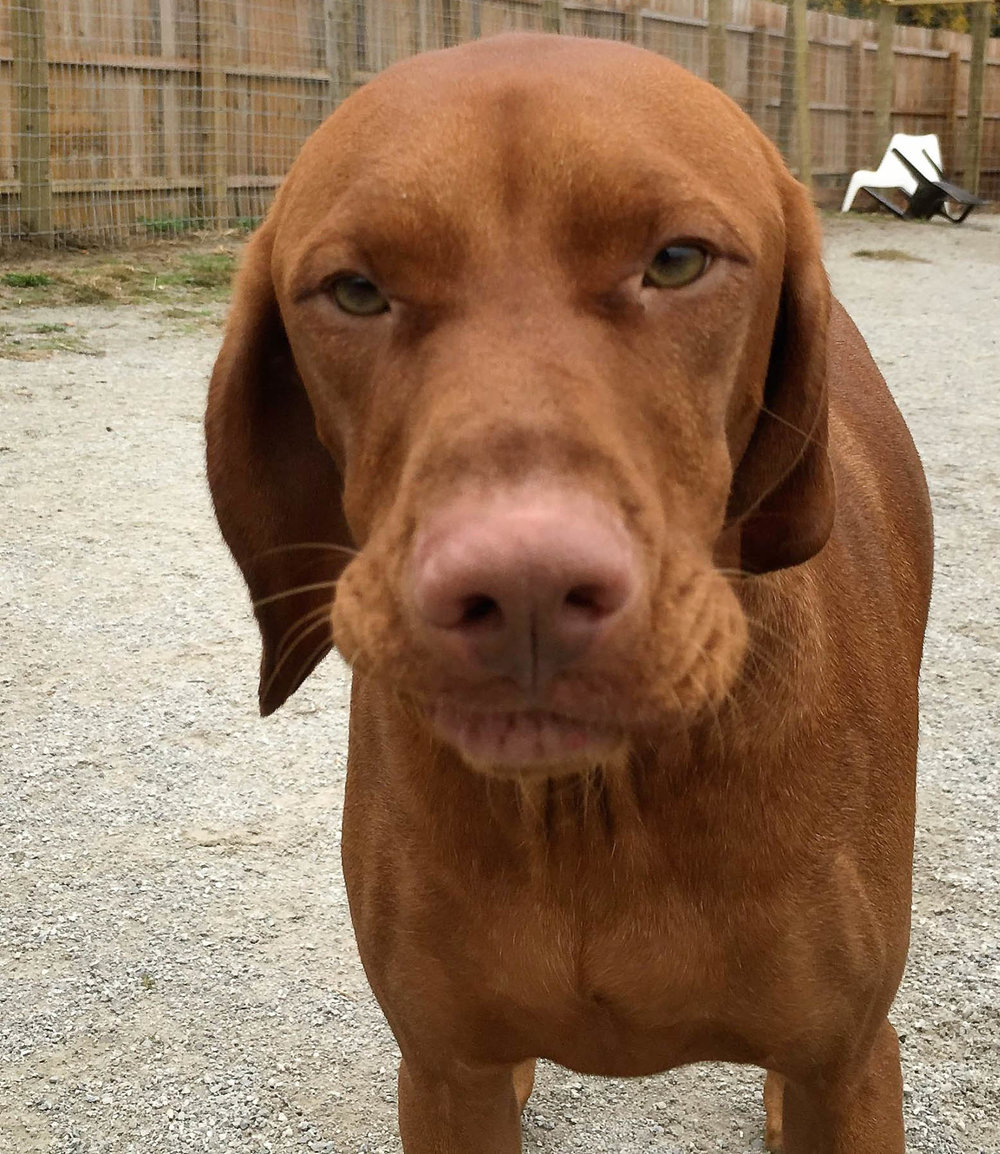 2016-dogs-44_35482667912_o.jpg