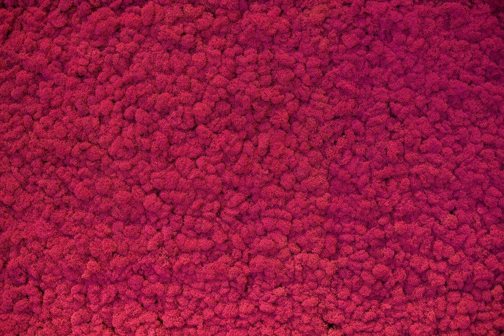 Cherry+Blossom+Intimates+Pink+Moss+Wall