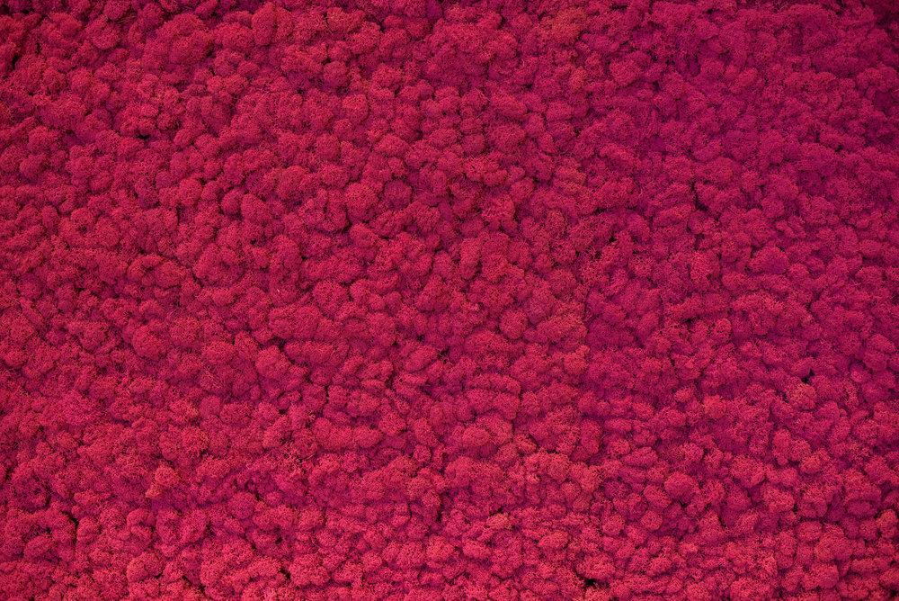 CherryBlossom-AshleighBingPhoto Pink Moss Wall-88.jpg