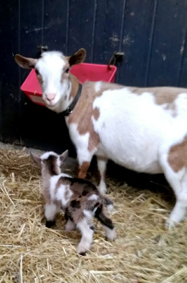 Olivetta and daughter Kit born 6/5/2018