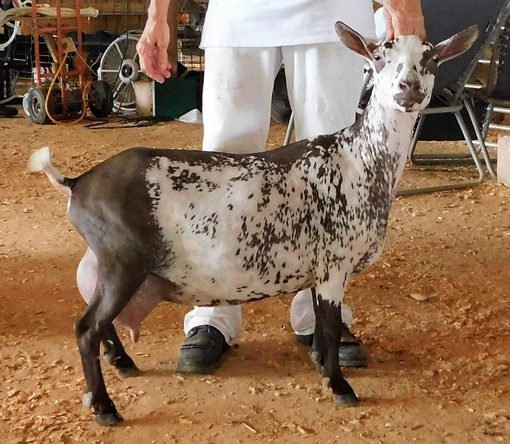 At the Warren Co. Show 8/8/2018