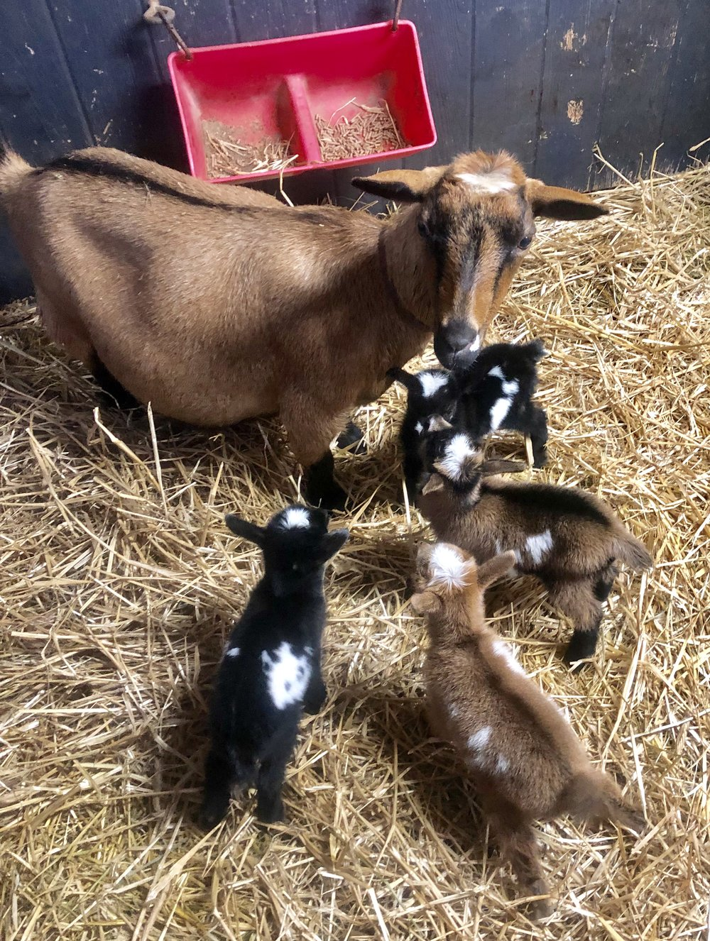 4 hours old