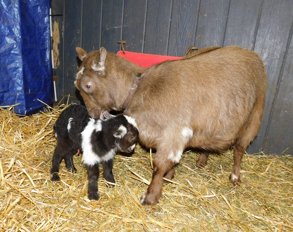 1 hour old