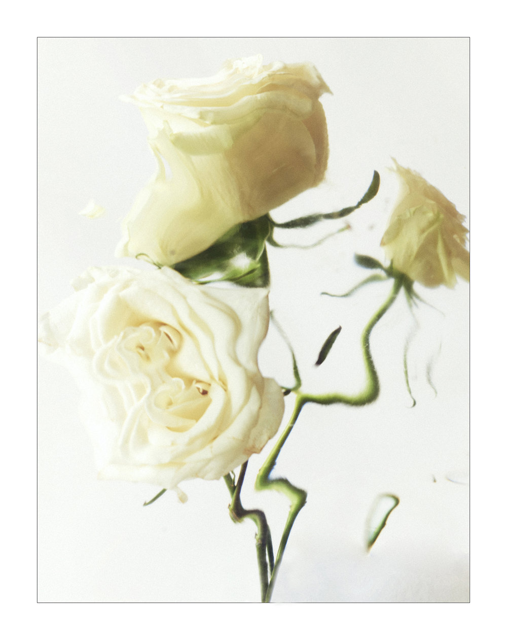 Personal - White Flowers