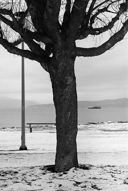 Kits Tree