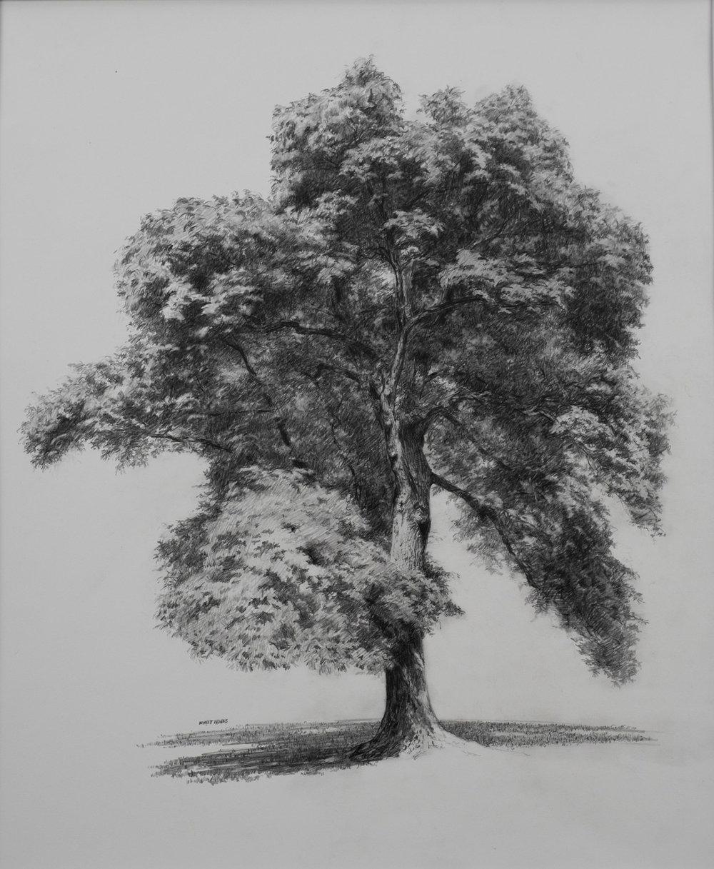 "Tree  Graphite 13""X16"""