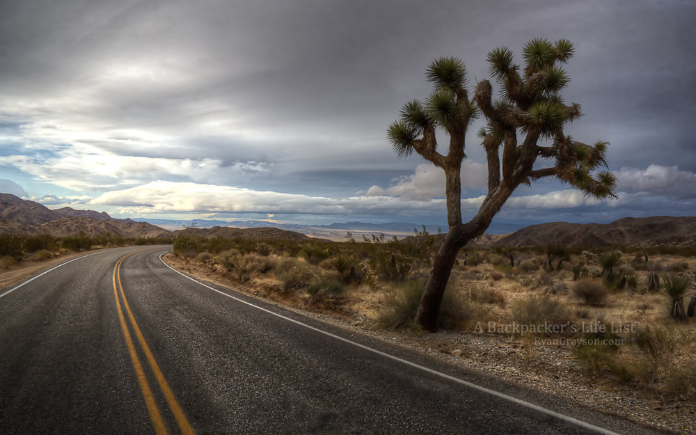 Drive Through Joshua Tree