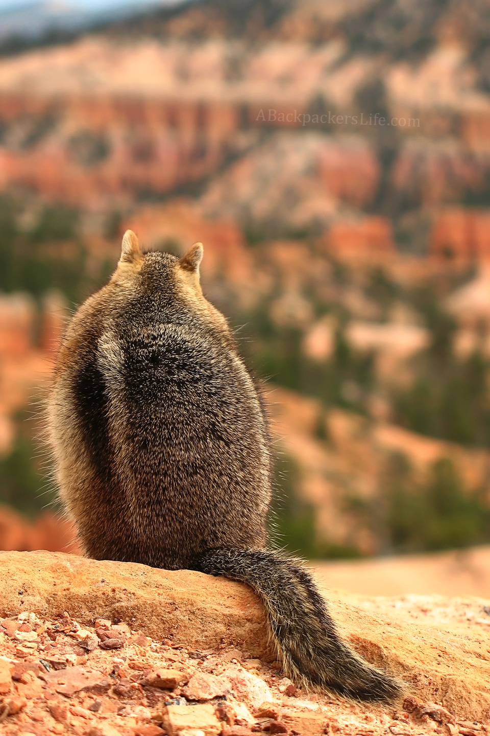 A Pondering Chipmunk at Bryce Canyon