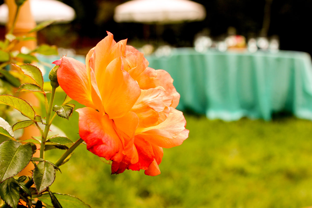 alexandra-rice-photography-santa-cruz-felton-wedding-reception-decor-flowers.jpg