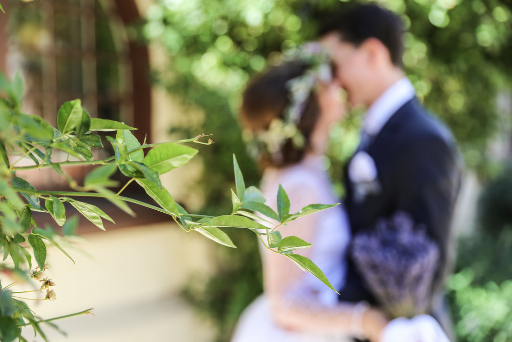 alexandra-rice-photography-monterey-wedding-bride-groom-san-carlos-cathedral-portrait-gardenkiss.jpg