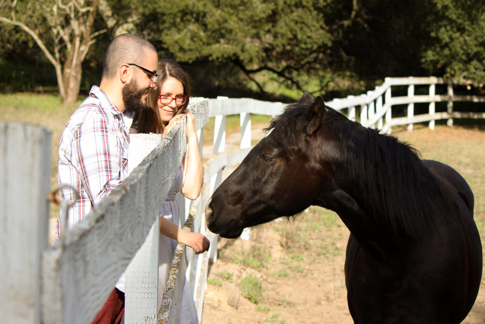 alexandra-rice-photography-engagement-shoot-quail-hollow-ranch-santa-cruz-horse.jpg