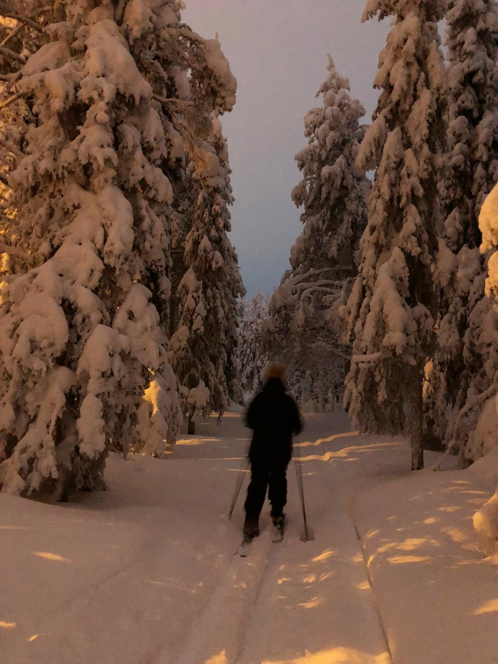 snowshoe hiking in Lapland forest