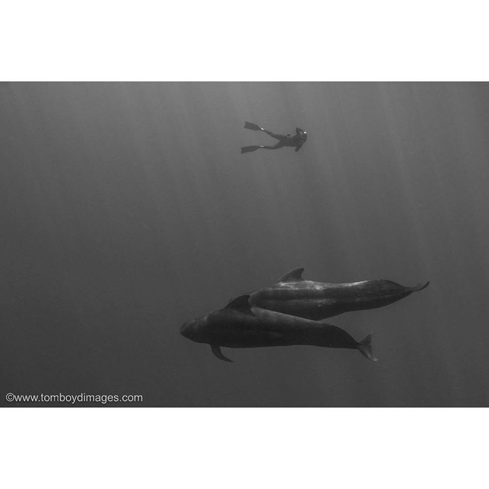 Deron Verbeck photographing short finned pilot whales, Big Island of Hawaii