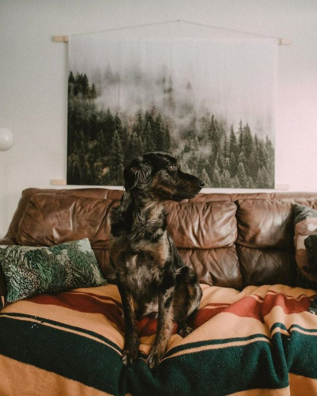 A photo of my handsome pup is featured in @tribearchipelago's new blog post of ADORABLE animals 😻 go to their blog and fall in love 🐶  The gorgeous tapestry in the back is from @society6 and photographer @patricklipsker!