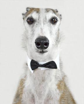 greyhound-small.jpg