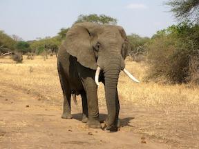 elephant-small.jpg