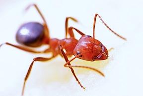 ant-small.jpg