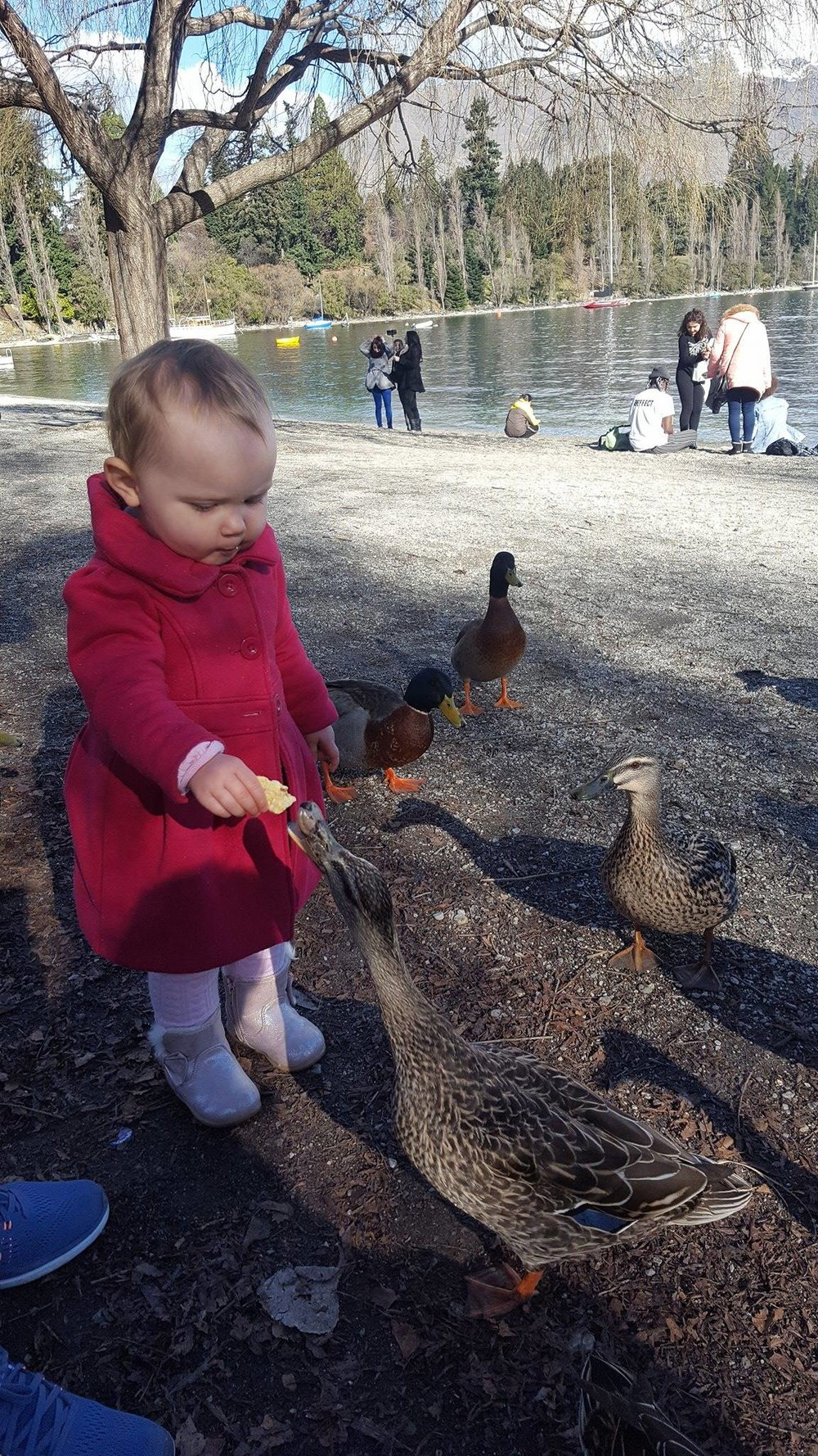 Feeding ducks is fun anywhere in the world.