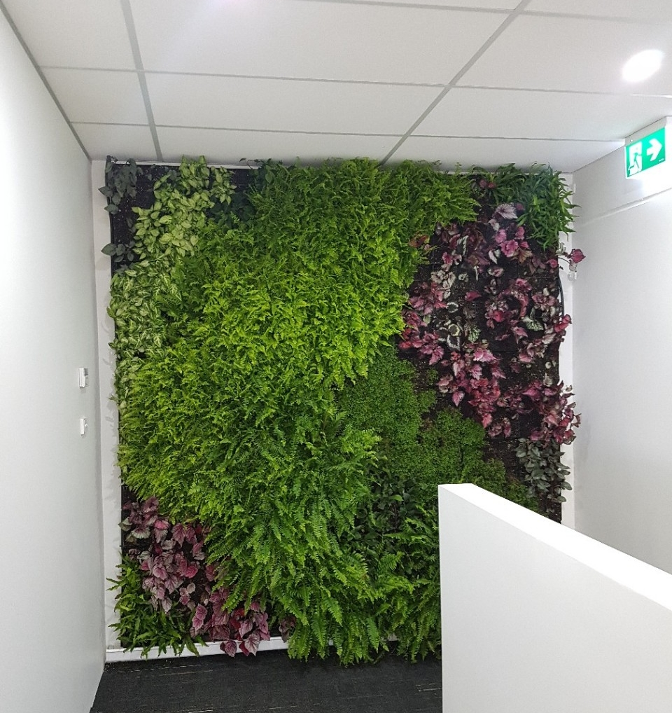 Coverite Head Office - Newcastle, Australia - Coverite Healthcare Interiors acknowledges the addition of greenery as a large contributor to increasing patient wellness. Installing a Living Wall in their showroom highlights their passion to create healthcare spaces that deliver better health and reduce patient admission times.