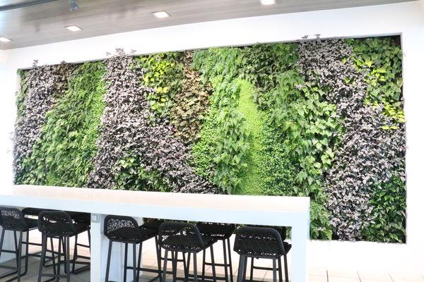 ANZ Koru Lounge Living Wall_New Zealand_SMI National_ANS Global System.jpg