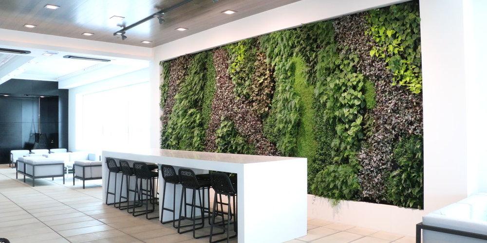 ANZ Koru Lounge Living Wall_New Zealand_SMI National_ANS Global System_main image.jpg