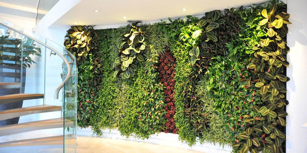 Living Wall in Reception Area, United Kingdom