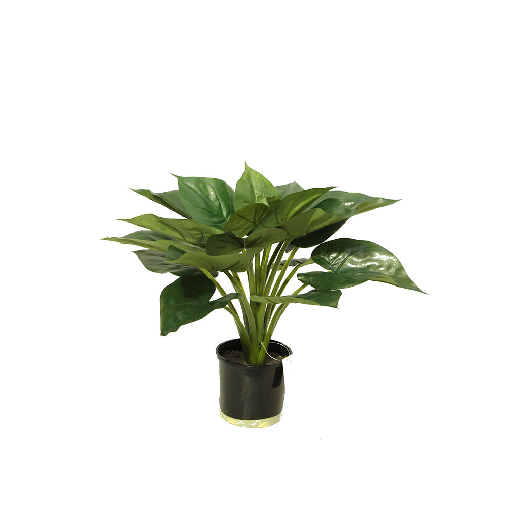 SMI National_Oculus 54cm_Artificial Plant.jpg