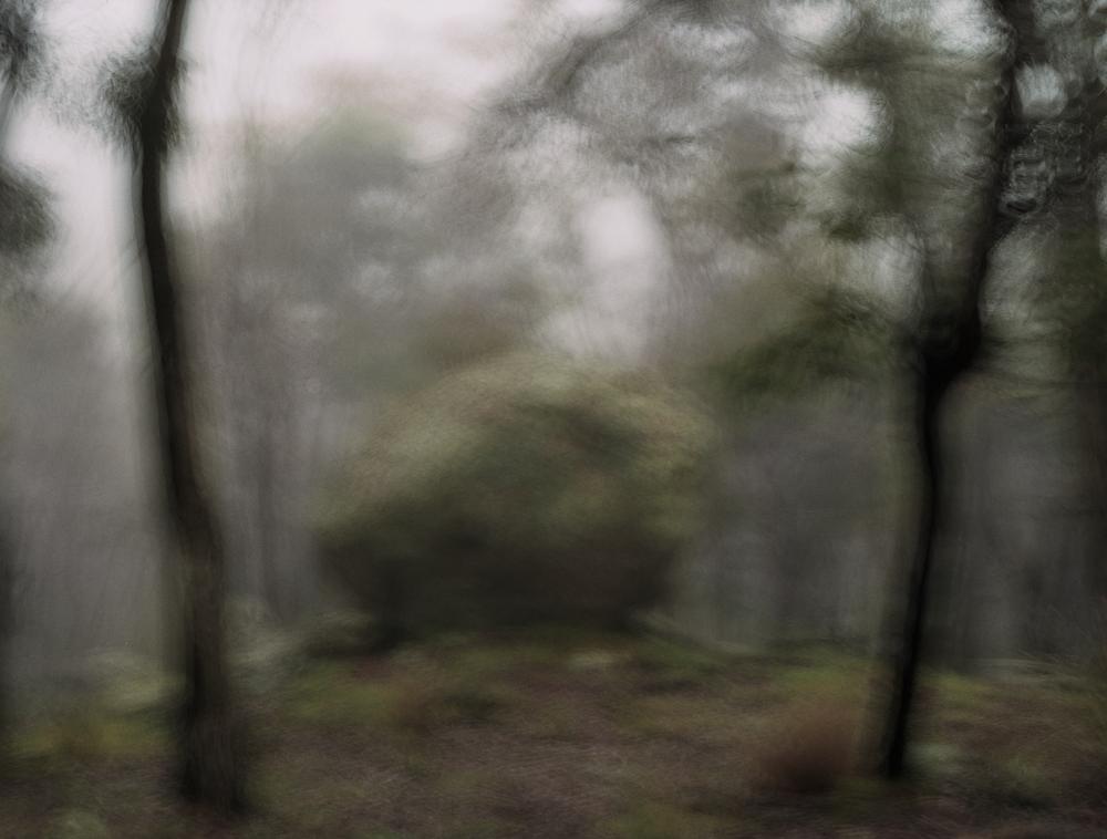/  Mountain Mist
